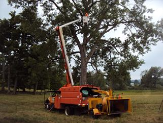 bucket truck, tree trimming